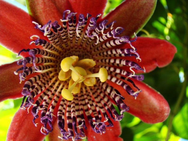 Фото бразильские цветы